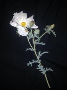 So frail, her thorns like needles.